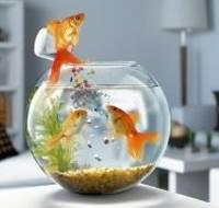 akvarium-dlja-zolotoj-rybki_6_1