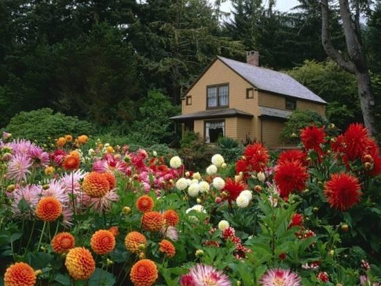 цветников и клумб